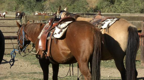 Red Horse Mountain Ranch: Oakley and Remington saddled up and waiting for us