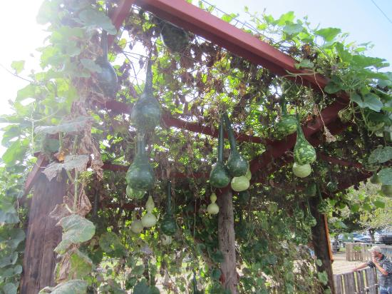 Sweet Berry Farm: Hanging gourds