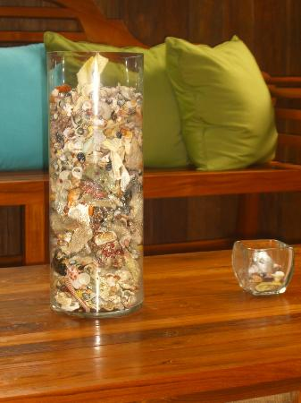 Physis Caribbean Bed & Breakfast: Seashells found at Manzanilla