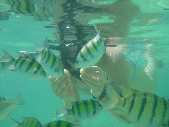 Phuket Sail Tours: Fun snorkling