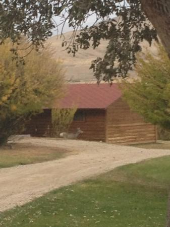 Schmalz's Red Pole Ranch and Motel: deer next to the cabin!