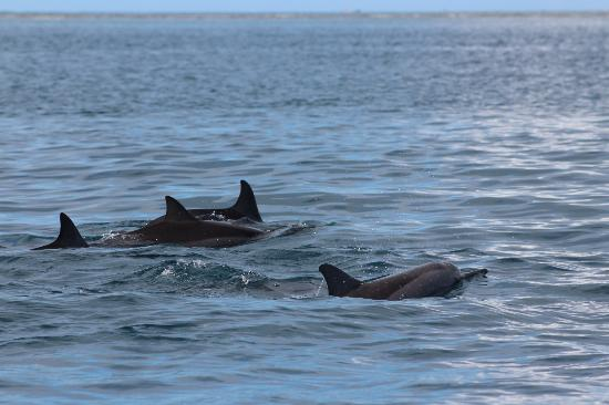 LUX Le Morne: dolphins