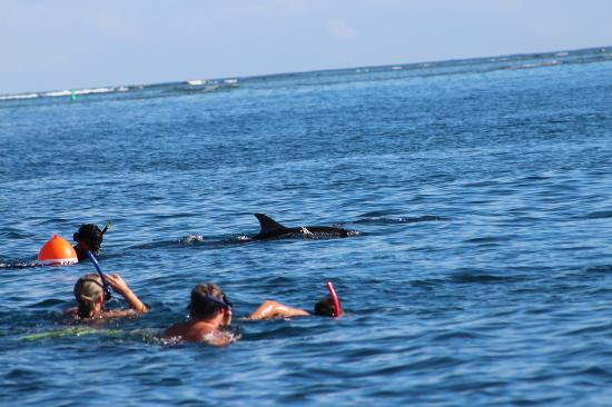 LUX Le Morne: dolphin swimming