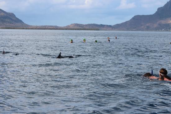 LUX* Le Morne: dolphin swim