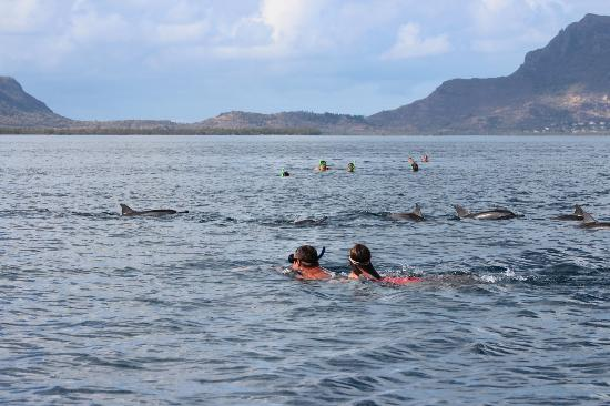 LUX Le Morne: swimming with the dolphins