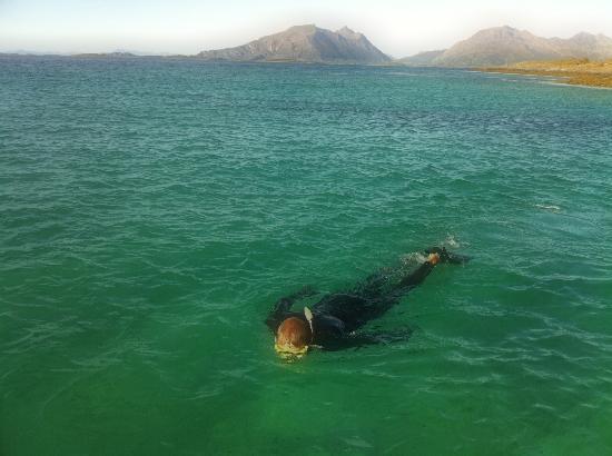 Helnessund Brygger: Free diving in Helnessund