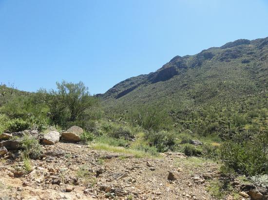 Arizona-Sonora Ørkenmuseum: 9