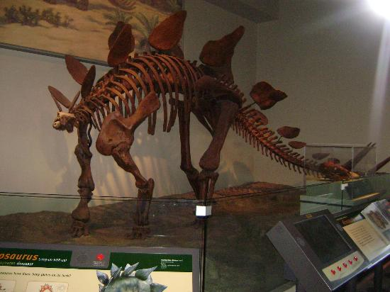 Dinosaur Exhibit Picture Of The Field Museum Chicago