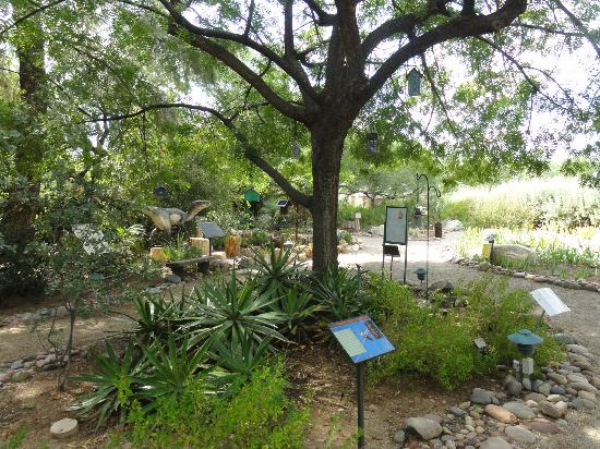 Tucson Botanical Gardens照片
