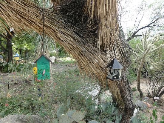 Tucson Botanical Gardens: 6