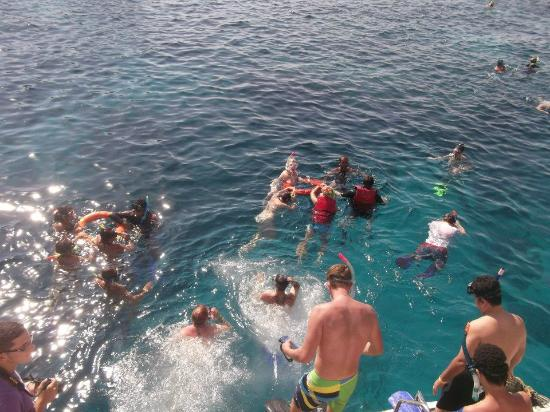 Blue Lagoon Diving Center: Shipwreck snorkeling, everyone jumpw into the water and snorkel around the reef to catch the boa