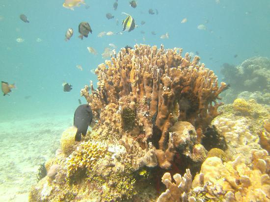 Manta Dive: Coral and fish
