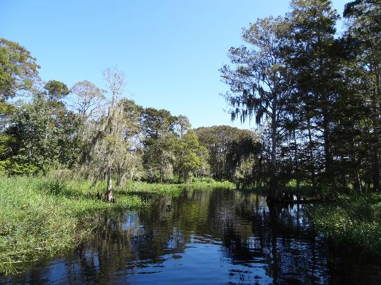 Alligator Cove Airboat Nature Tours: {6} No words needed to tell you how beautiful it is here. Just watch and enjoy the pics!
