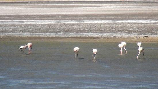 Deserto do Atacama: Parque dos Flamingos