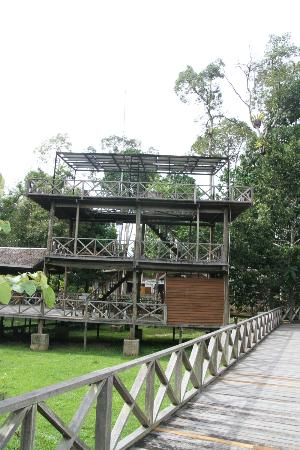 Borneo Nature Lodge: Observation Tower