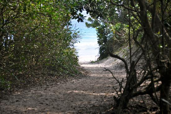Pousada Riacho dos Cambucas: Path to the famous Lopes Mendes beach