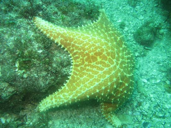 Over Sea Dive Center: Starfish