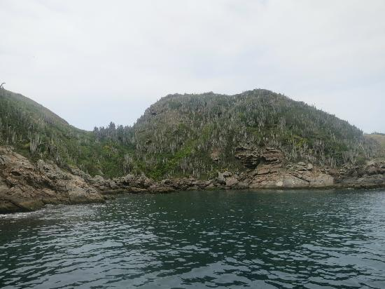 Over Sea Dive Center: Parrot Island (off Praia do Forte)