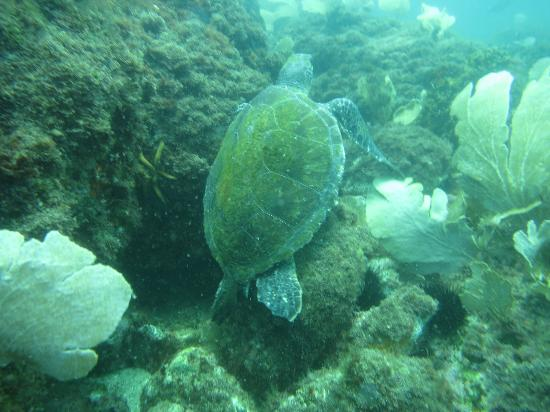 Over Sea Dive Center: Turtle