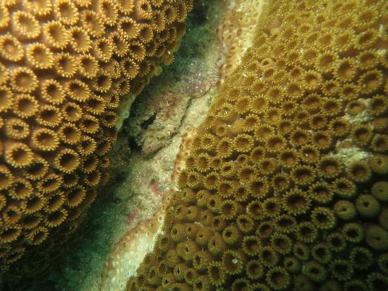 Over Sea Dive Center : Coral