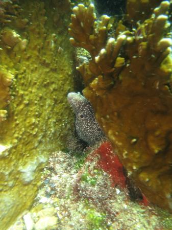 Over Sea Dive Center : Cute