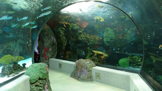 Walk Through Aquarium Picture Of Virginia Aquarium