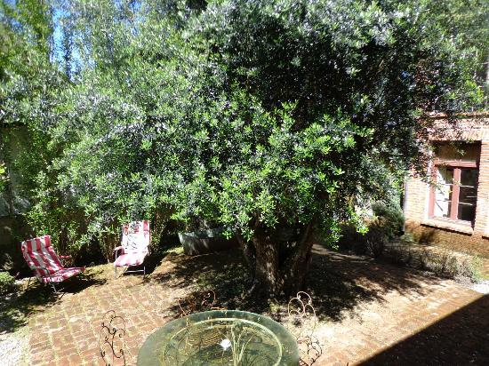 Casa Zinc: el olivo visto desde la habitación