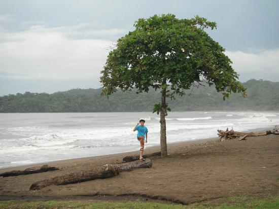 El Sitio Playa Venao: Beach Tree Playa Venao Panama