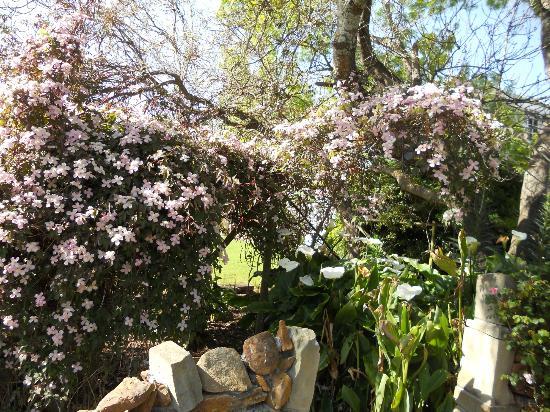 Hawley House: Garden
