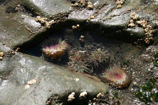 Second Beach Trail: Tide pools