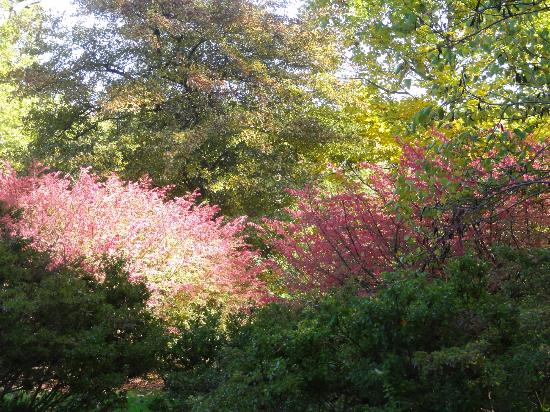 Winterthur Museum, Garden & Library : Fall color