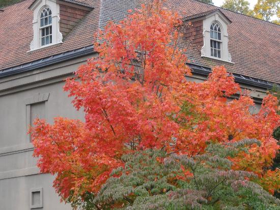 ‪‪Winterthur Museum, Garden & Library‬: Fall color‬