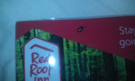 Red Roof Inn Cedar Rapids: bed bug