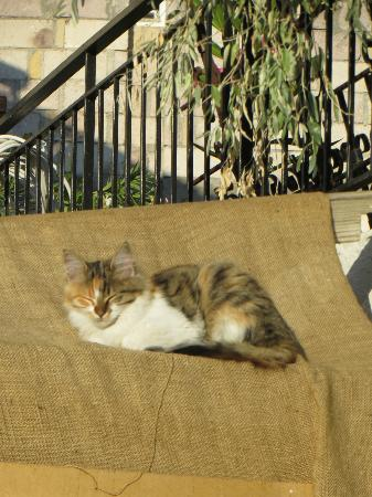Karadut Cave Hotel: resident kitty