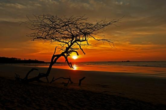 ReFLEXion Yoga Tamarindo : Langosta Sunset
