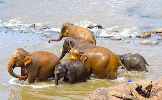 Royal Palms Beach Hotel: elephant orphanage 2