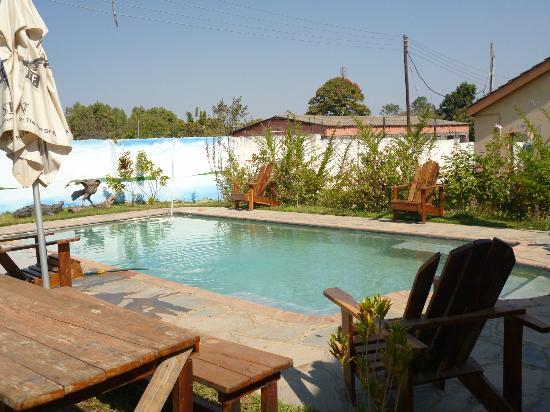Bongwe's Big Bush : The pool at Bongwe