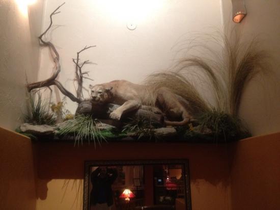 Table Mountain Inn: stuffed mountain lion in lobby.
