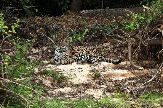 Taima Ecologic Reserve