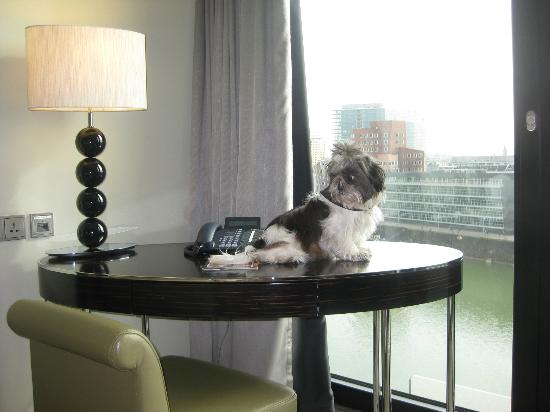 Hyatt Regency Dusseldorf: Bonny taking a look at the tremendous view from the bedroom