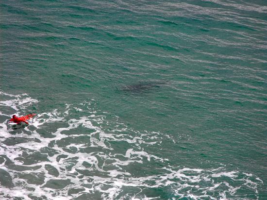 Seventy-Five Mile Beach: indianhead...squalo tigre segue un surfista