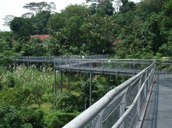 The Southern Ridges: Partof the raised walk way