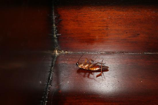 Hilton Bora Bora Nui Resort & Spa : scarafaggio vicino al comodino