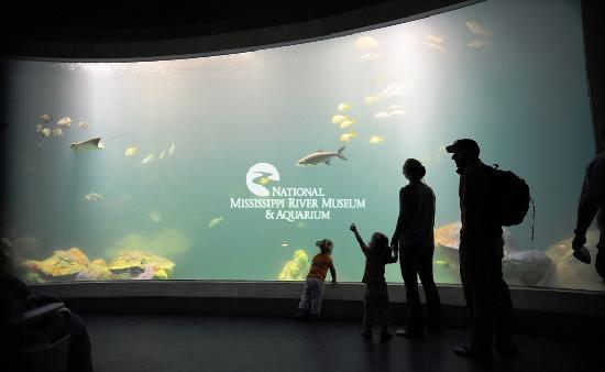 National Mississippi River Museum & Aquarium: Gulf of Mexico salt water aquarium in the National River Center.