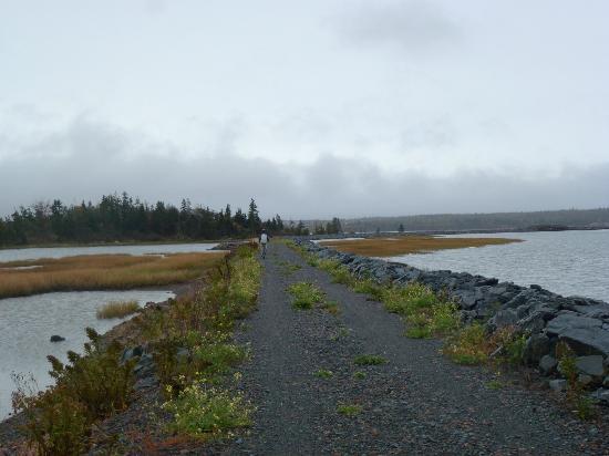 Eastwind Cycle: Bike path through the marsh.