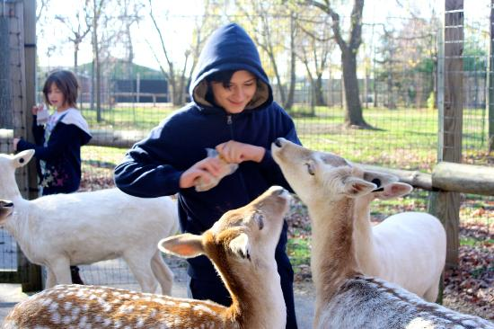Wisconsin Deer Park: Even teens love it!