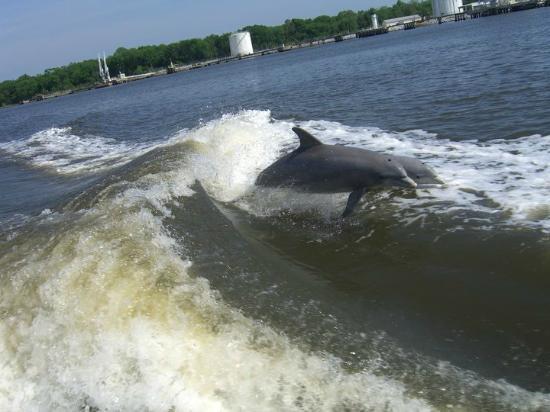 Dolphin Boat Tours Savannah