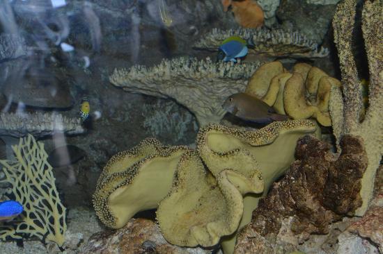 Downtown Aquarium: Denver Aquaeium October 21, 2012 