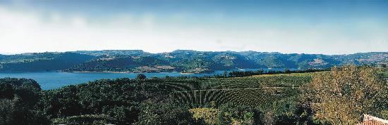 Barberani Wine