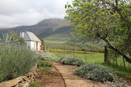 Swartberg Country Manor: Blick auf das Cottage/ Honeymoonsweat